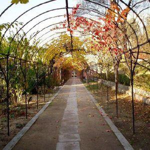 localizacion-evento-jardin-botanico-madrid-12