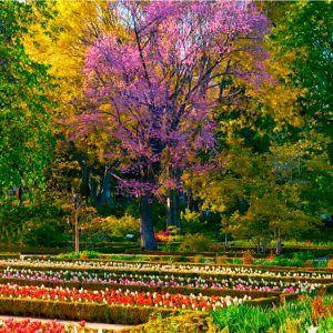 localizacion-evento-jardin-botanico-madrid-3
